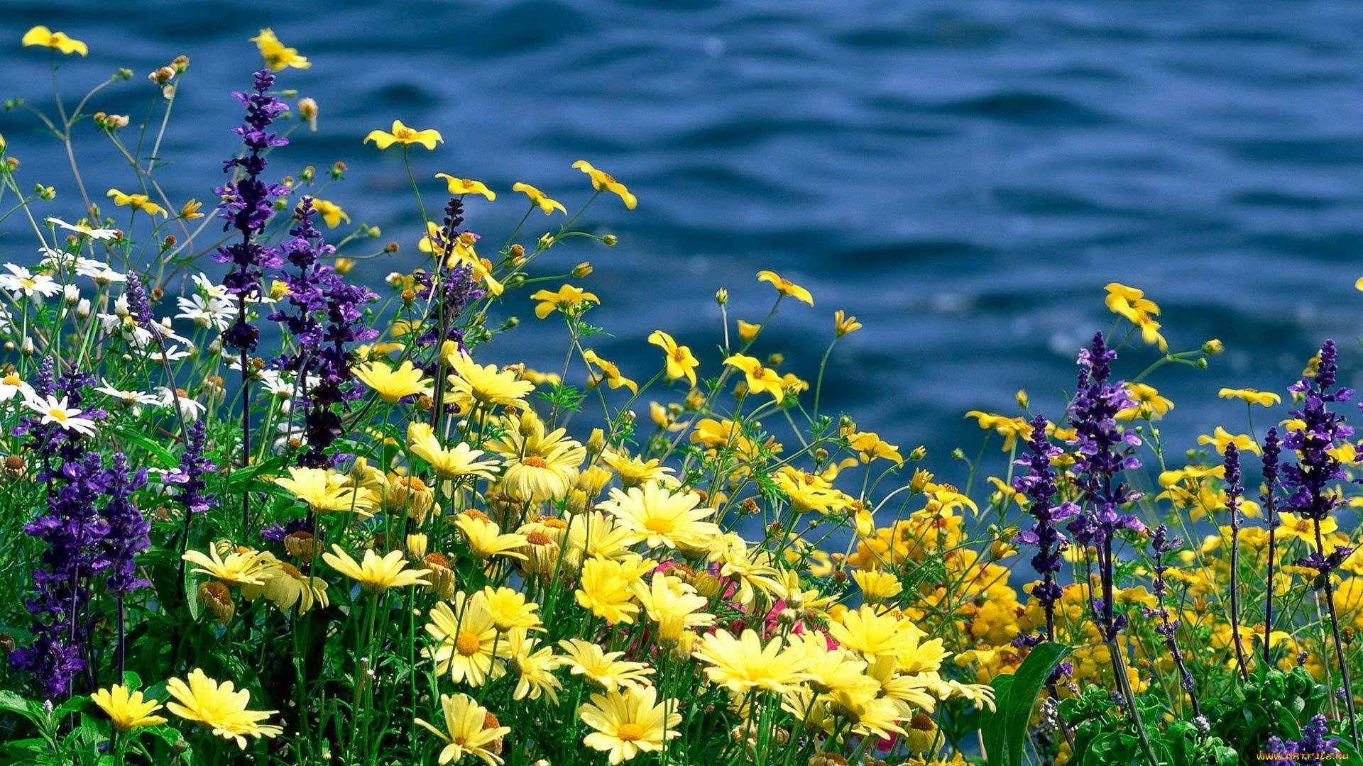 решение фото полевых цветов в хорошем качестве экземпляр таксодиума мексиканского